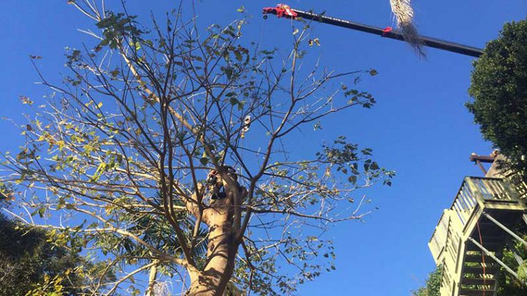 tree pruning and trimming