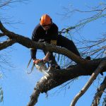 tree removal Russell Lea