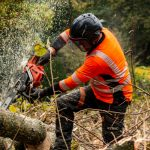tree removal Sydney services