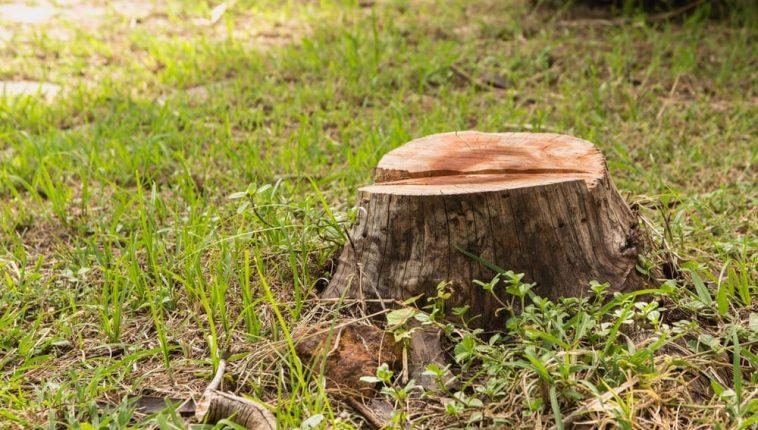 stump removal Sydney