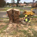 Tree Services North Sydney