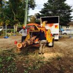 tree removal Lucas heights