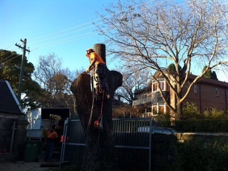 tree removal oyster bay
